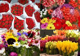 flower food packets salors almanac week 14