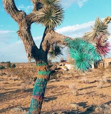 beth orton removes 1973 with spray painted joshua tree