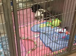 California Wildfire Animal Rescue by At Least 70 Dogs Rescued From Hoarder In El Cajon News