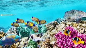 Great Barrier Reef Map 93 Percent Of The Great Barrier Reef Is Suffering National