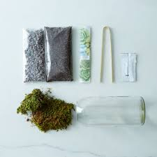 moss u0026 sedum terrarium bottle on food52