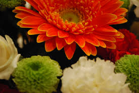 mums flower mums kuwaderno ni maia