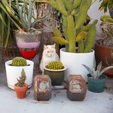 tulum inspired decor popsugar home