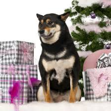 the best gifts for pet owners