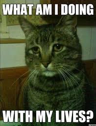 Sm Meme - more cat memes modern cat
