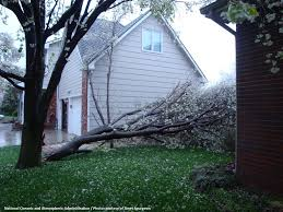 tree permits removal and concerns department of environmental