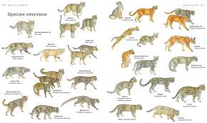 secrets of the world u0027s 38 species of wild cats u2013 national