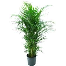 houghton lake home depot black friday sale paper delray plants aloe vera in 4