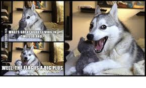 Dog Jokes Meme - whats great about living in switzerland well the flag isa big plus