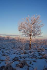 frosty landscape tree free stock photo domain pictures