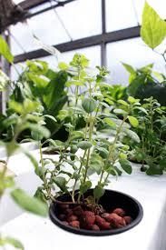 best 25 hydroponic gardening ideas on pinterest indoor