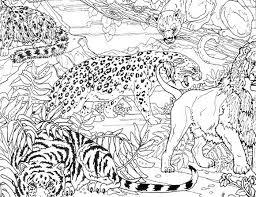 animaux sauvages de la jungle 11 animaux u2013 coloriages à imprimer