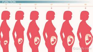 Human Anatomy Cervix Anatomical Structure Mean Cervix Definition Anatomy Function