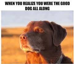 Hilarious Dog Memes - 15 hilarious dog memes that will make your day so much better