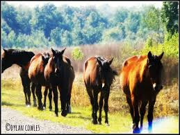 Soon Horse Meme - horse dreams memes and themes synchronicityjournaling