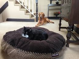 Dog In Bed Meme - cats stealing dogs beds 24 photos thechive