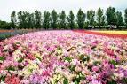 ธรรมชาติ: ทุ่งดอกไม้ สวยๆ