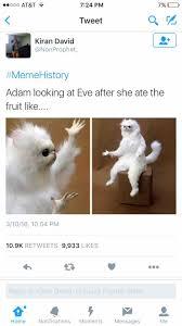 White Cat Meme - biblehistory rebrn com