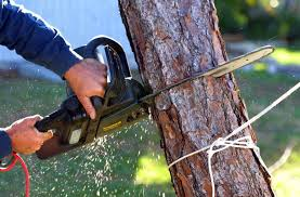 tree removal companies in san diego the levin institute the