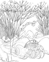 free printable sea life coloring pages 604 best coloring pages images on pinterest coloring books