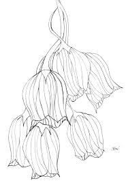 drawing of spring flowers cliparts co