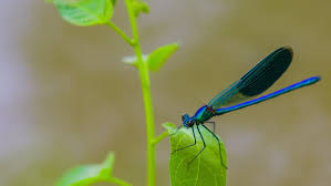 small dragonfly on river grass small insect animals known as