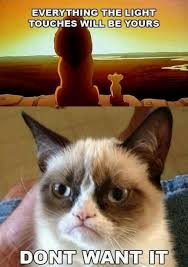 Grumpy Cat Coma Meme - 51 best grumpy cat images on pinterest funny things grumpy cat