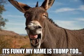 donkey jackass braying imgflip