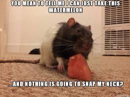Rat Meme - i bring to you skeptical rat meme guy