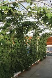 hydroponic vegetable photo tour hydroponics backyard aquaponics
