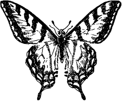 vintage butterfly image nice the graphics fairy
