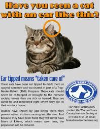 i found a cat windsor essex humane society storewindsor essex