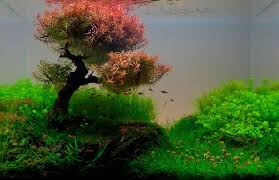Mountain Aquascape 22 Amazing Underwater Aquascape Landscaping Pictures That Feature