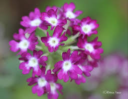 meaning of flower colors smell the flowers blog round purple bloom