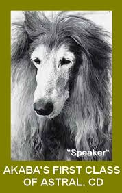 us afghan hound about us