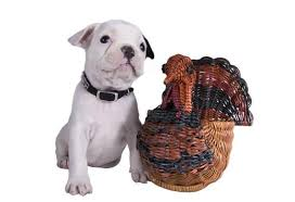 top ten tips for feeding pets thanksgiving leftovers petmd