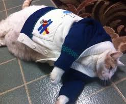 sweaters for cats cats in sweaters are so babamail