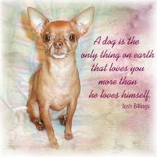 when a pet dies meet the chihuahua editorial when a beloved pet dies