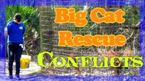 important facts you should know about big cat rescue of tampa