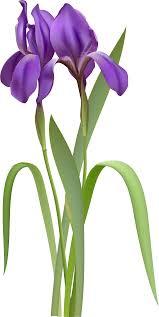 top 97 iris flower clip art best clipart blog