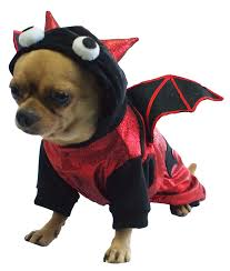 bat costumes for dogs halloween wikii