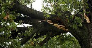 tree service ft myers cape coral stump