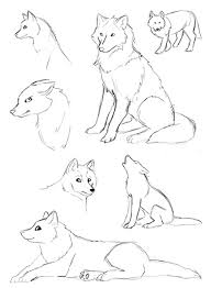 a few wolf sketches by howmanydragons on deviantart