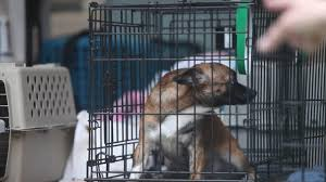 after rescue of 276 dogs monmouth spca seeks donations