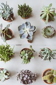 1445 best sucker for succulents images on pinterest plants
