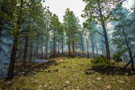 Arizona forest images Kaibab national forest upgrades fire danger to moderate knau jpg