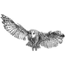 owls polyvore