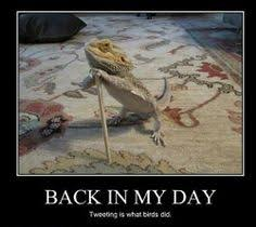 Horny Toad Meme - bradata agama pogona vitticeps central bearded dragon
