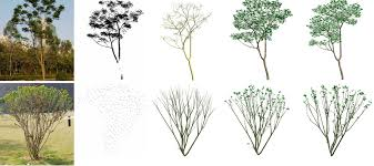 automatic reconstruction of tree skeletal structures from point clouds