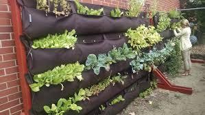 master gardeners nh u0026 youth gardens